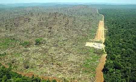 cms_1778/Deforestazione-della-foresta-amazzonica.jpg