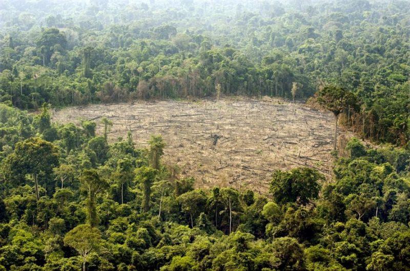 cms_1778/l43-deforestazione-foresta-amazzonica-131115103348_big.jpg