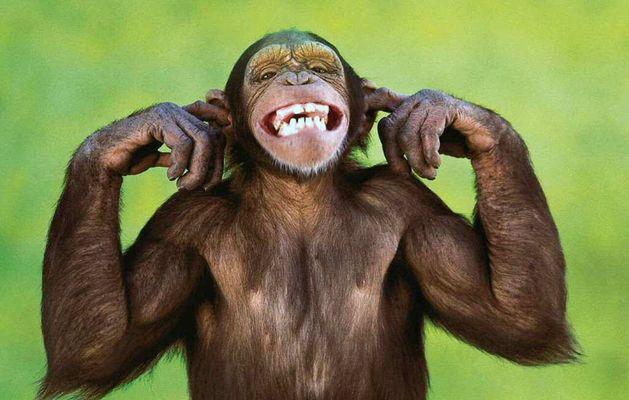 Scimmia Che Ride Disegno.Scimmia Che Ride Disegno