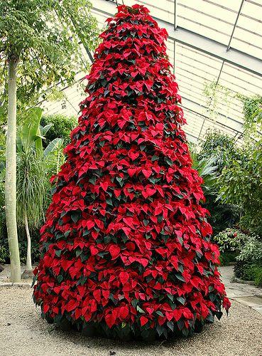 Stella Di Natale In Casa.Stella Di Natale La Pianta Piu Regalata A Natale Come Farla Durare