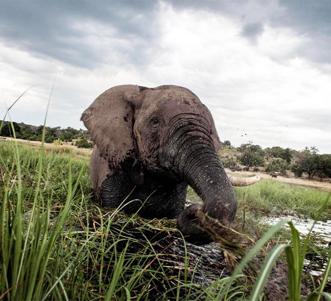 Botswana:_anomala_moria_di_elefanti_neglu_ultimi_tre_mesi