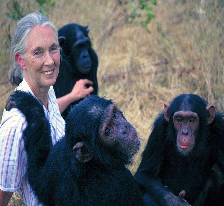 14_luglio,_Giornata_Mondiale_dello_Scimpanzé