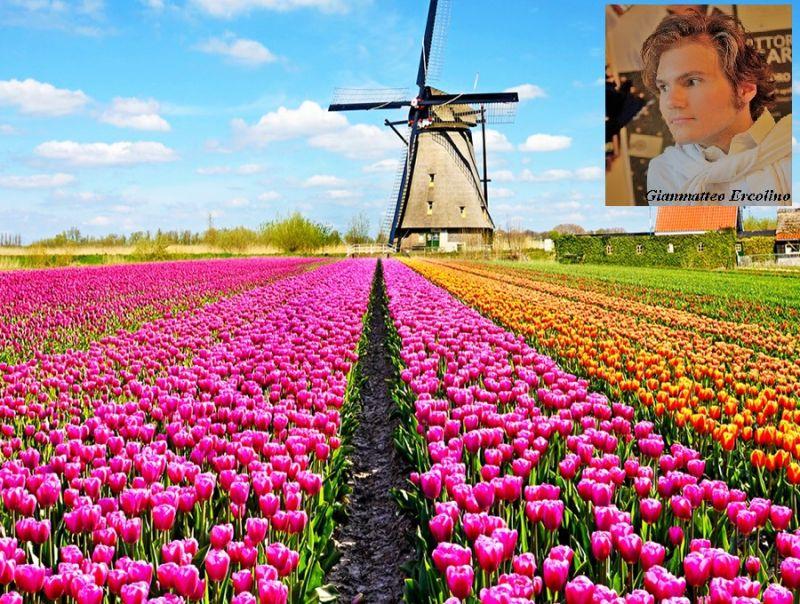 I_Paesi_Bassi_sperimentano_l'eolico_senza_sovvenzionamenti_pubblici