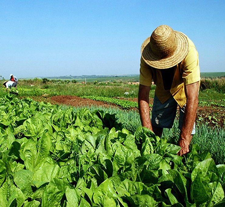 Il_lavoro_agrario_in_Europa