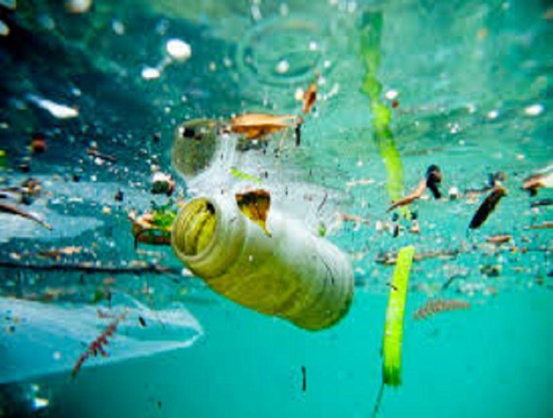Inquinamento_da_Polietilene:_un_bruco_salverà_l'ambiente