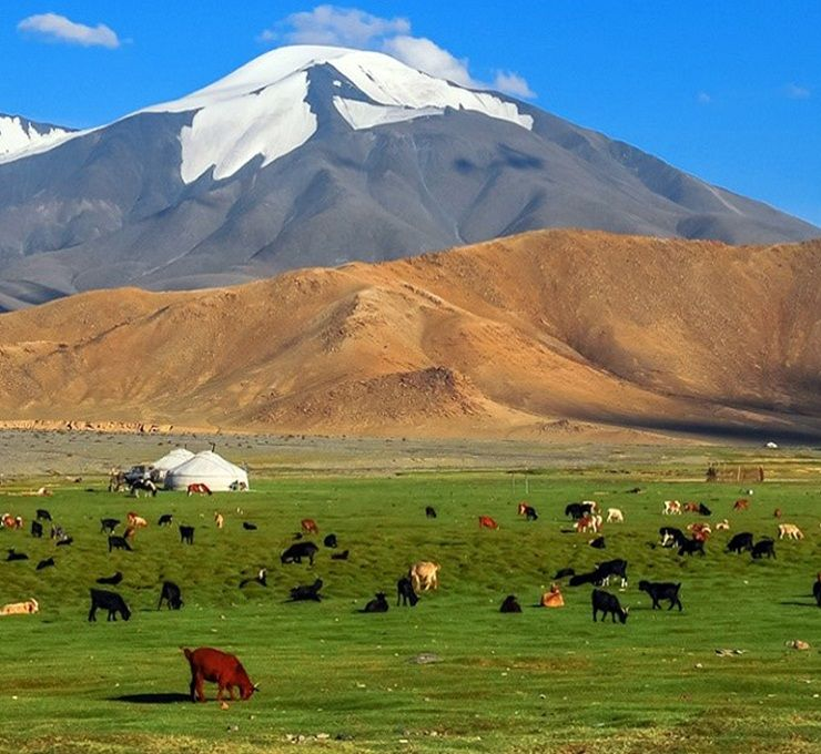 La_Mongolia_e_la_veterinaria:_una_storia_iniziata_3_000_anni_fa