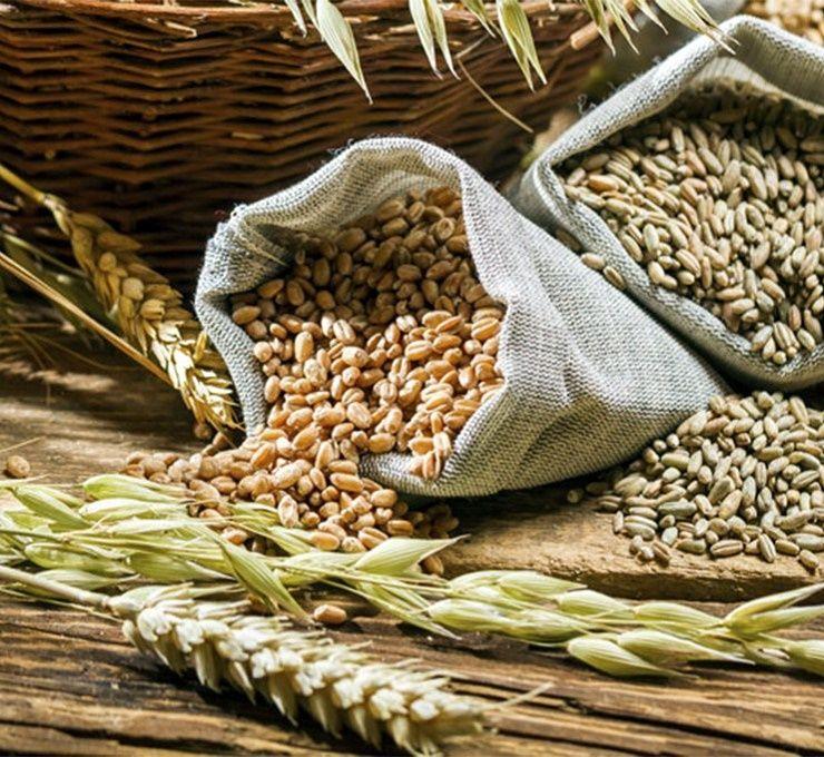 La_produzione_di_cereali_in_Europa