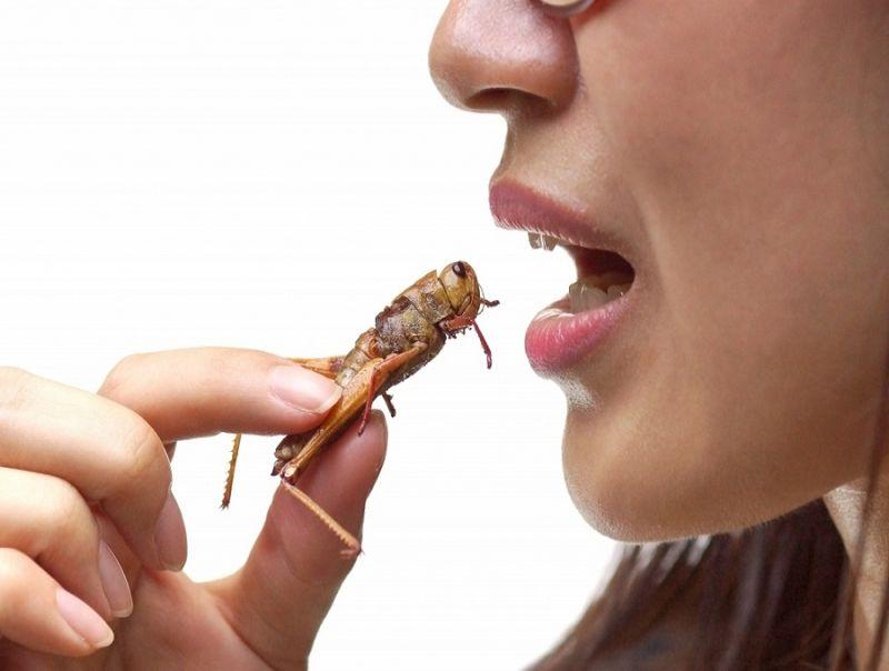 Alimenti:_niente_insetti_a_tavola,_nessuna_specie_autorizzata