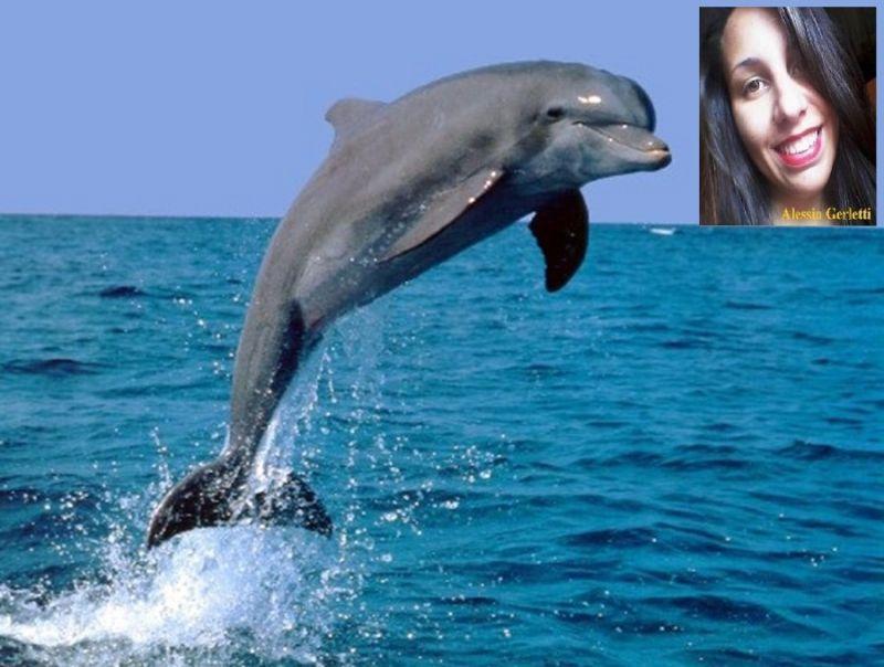 Siate come delfini liberi di volare sullacqua international web