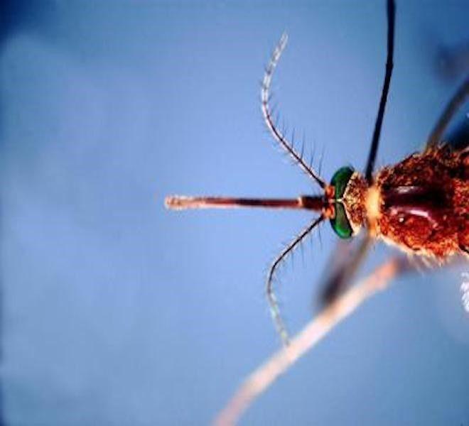 World_Mosquito_Day,_il_20_Agosto