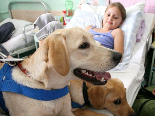 PET__THERAPY