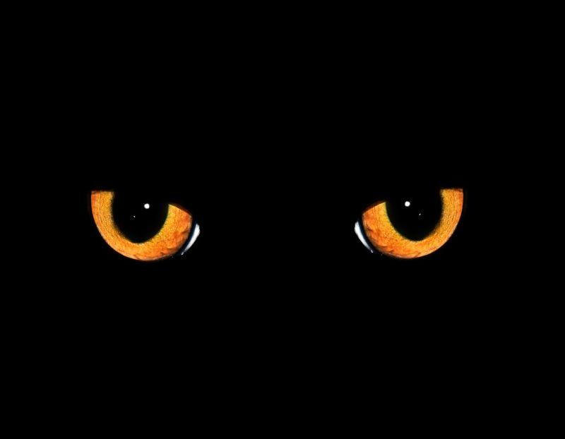 cms_1885/occhio-un-gatto-nero-sta-attraversando-la-pista-658.jpg