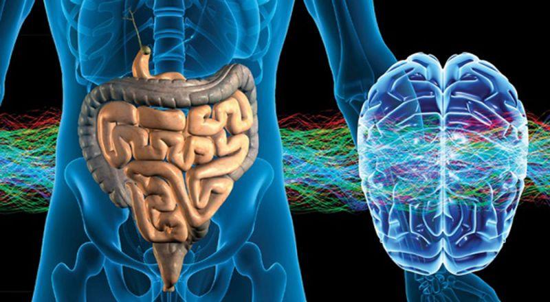 L Intestino Un Secondo Cervello La Flora Batterica Influenza La Salute Psico Fisica E Il Comportamento Umano International Web Post International Web Post