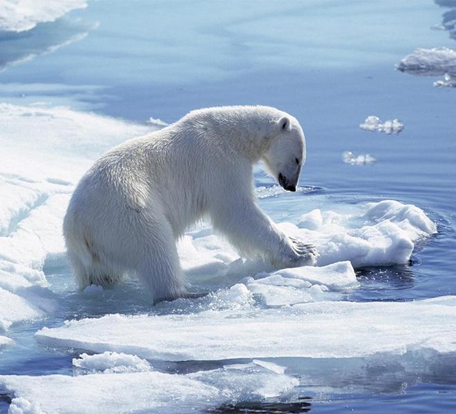 Il_Polo_Nord_rischia_di_rimanere_senza_ghiacciai_prima_del_2050