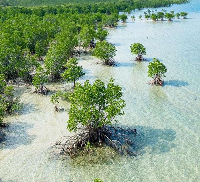 Da_cosa_dipende_la_perdita_delle_mangrovie
