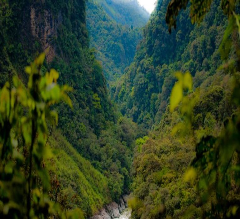 'Señal_de_socorro'_Amazzonia