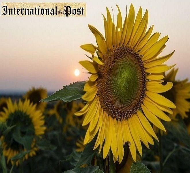 A_Casaprota_(RI)_l'estate_si_festeggia_con_le_fettuccine_ai_funghi_porcini_–_12-13_ago