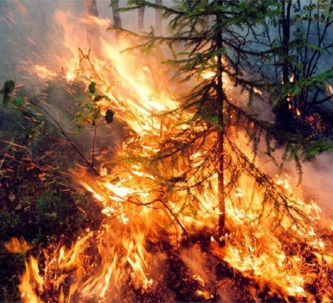 Emergenza_incendi_in_Siberia