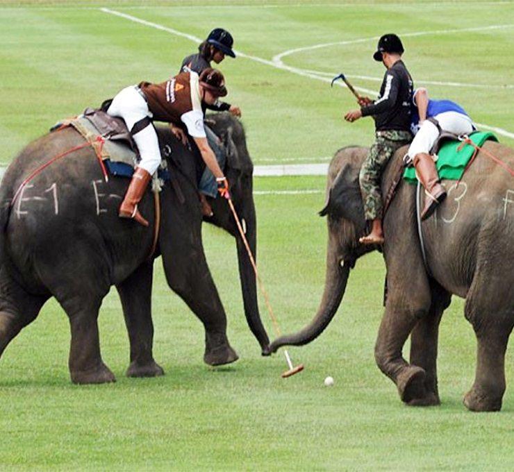 La_Thailandia_dichiara_guerra_al_Polo_con_gli_elefanti