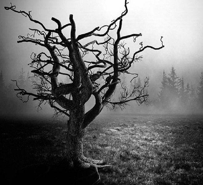 La_gestione_della_morte_e_l'elaborazione_del_lutto_in_età_social